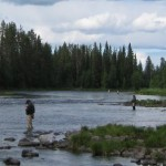 Fly fishing grayling-trout